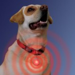 Collar Light-