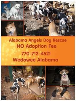Alabama Angels Dog Rescue
